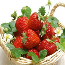 Best Price for for Canned Fruit frozen liquid best Strawberry export to Pakistan Importers