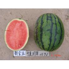 Cheap for China Watermelon Seeds,Hybrid Watermelon Seeds,Seedless Watermelon Seeds,Watermelon Seeds For Planting Supplier F1 hybrid seedless watermelon seeds supply to Senegal Manufacturers