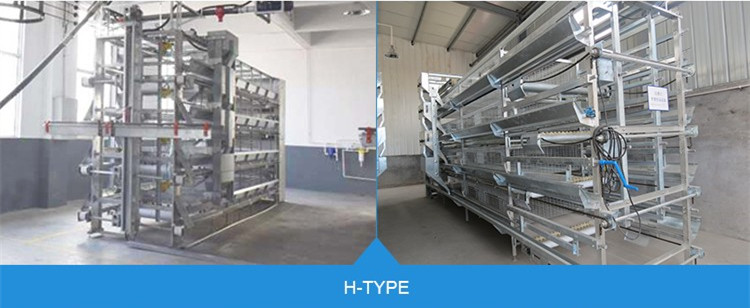 H Type Hen Chicken Equipment