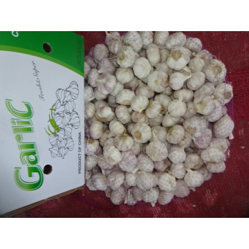 Export Standard New Fresh Normal White Garlic