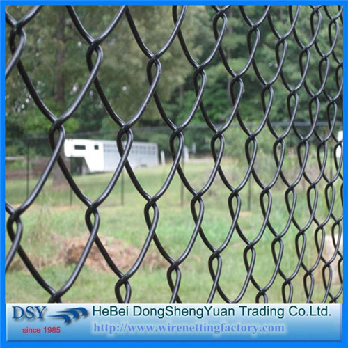 31 Years Golden Member Chain Link Fence