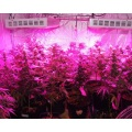 300 / W600W / 900W / 1200W / 1500W LED Grow Light Full Spectrum