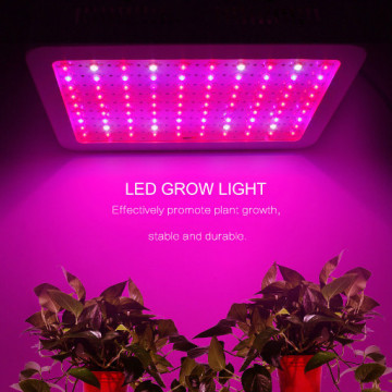Maualuga Led Grow Light Hydroponic Factory