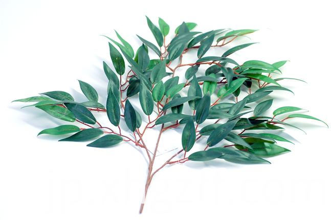 Eucalyptus Essential Oil How To Use
