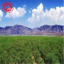 New Harvest GMP Factory Low pesticide Goji Berries