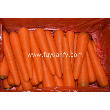 Shandong fresh carrot on sale