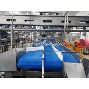 Meat products chain conveyor