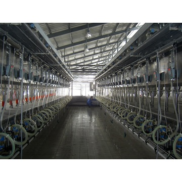 Parallel milking parlor for cows
