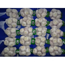 Normal White Garlic Fresh Crop 2019