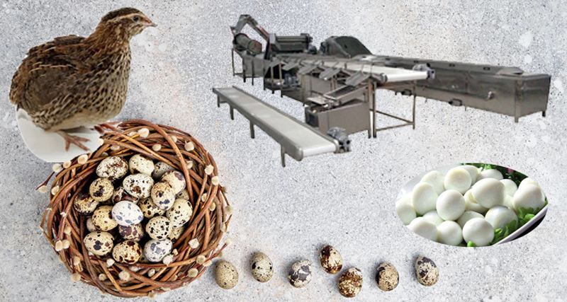 Quail Egg Shell Peeling Machines Processing Line