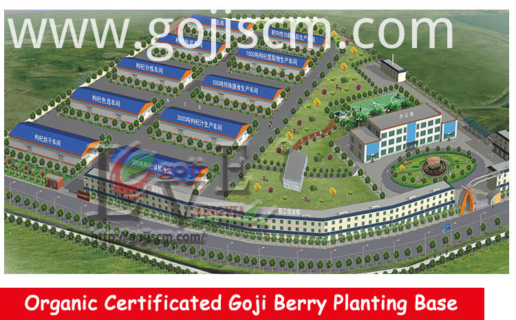 Low Pesticides Goji manufacturer