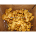 150g Anqiu fresh ginger