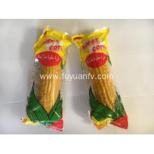 Fresh sweet fruit corn ready to eat
