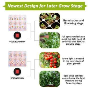 COB LED Grow Light Cbx3590 cxa2530 Hydroponic