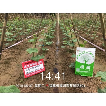 Root Fertilizer Super Gena Water Soluble