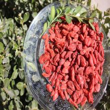 Natural Low Price Free Sample Organic Goji Berry