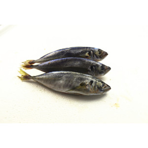 Whole Sea Round Frozen Scad Mackerel