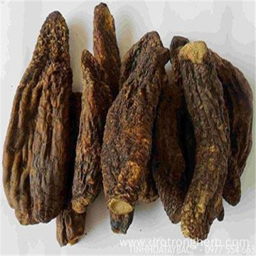 Natural high-quality Cistanches Herba medicinal product