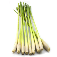 Free Sample Lemon grass oil