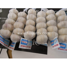 Good quality 100% for Pure White Garlic 4.5-5.0Cm fresh white skin garlic export to Equatorial Guinea Exporter