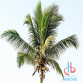 Customized Artifical Coconut Palm Tree