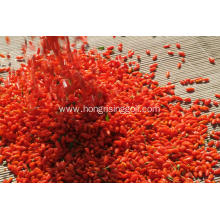 New harvest Ningxia organic natural dried goji berries