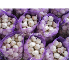 5.5-6.0cm normal white garlic