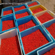 2018 organic dried goji berries Lycium barbarum