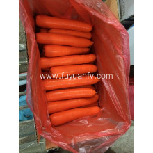 2019 new harvest xiamen fresh carrot