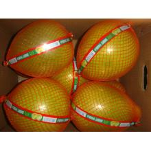 Good quality hot  sale honey pomelo