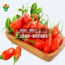 Organic tibetan plateau goji berries natural wolfberry