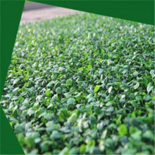 Personlized Products for Artificial wall Grass Artificial Aglaia Odorata wall export to Japan Wholesale
