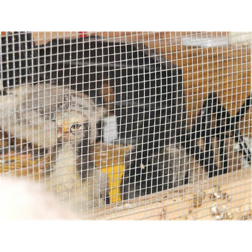Galvanized Welded Poultry Netting