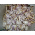 New Normal White Garlic Jinxiang