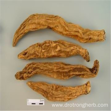 Top quality Scrophulariae radix Figwort Root xuanshen