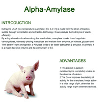 Leading for China Single Feed Enzymes,Feed Enzymes,Poultry Feed Single Enzymes Wholesale Strong liquefying activity alpha amylase supply to Grenada Exporter