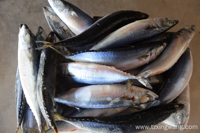 Whole Round Frozen Mackerel Fish