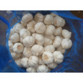 Different Sizes of Jinxiang Pure White Garlic