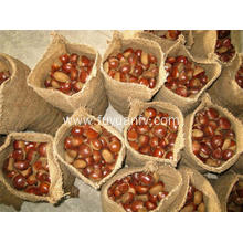 Hotsale Chestnut with Good Taste
