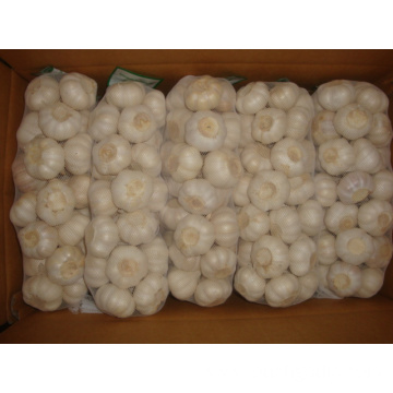 Pure White Garlic 4.5cm packing 1kg 10bags carton