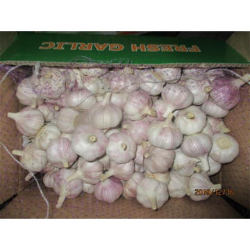 Normal White Garlic Fresh 5.0cm