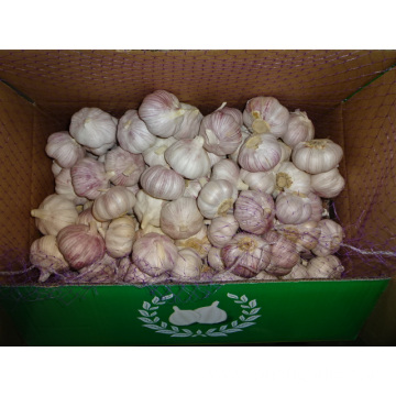 Good Quality Fresh Normal White Garlic