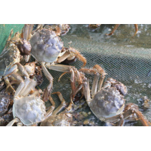 Latest aquaculture attractant TMAO DMPT  DMT Hot-selling