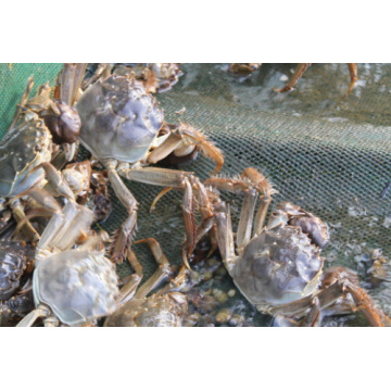 DMPT 98% Feed additives for Shrimp Crab
